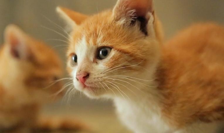 电影《爱猫之城》发暖心推广曲 俏皮《猫语》述心事