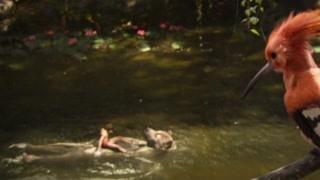 狼孩和大熊洗澡   哼起来森林之歌