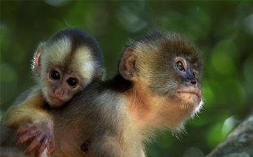 《亚马逊萌猴奇遇记》预告 揭露动物大咖海选内幕