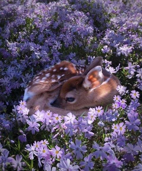 """""""鹿精灵"""" 森林中的梅花鹿灵动可爱"""