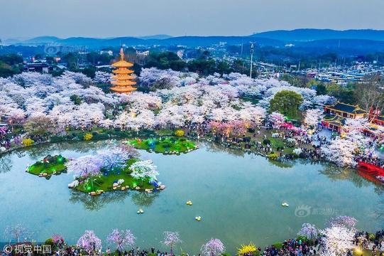 美爆了!航拍東湖櫻花園夜景