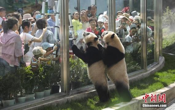 青海西宁大熊猫馆吸引大量游客