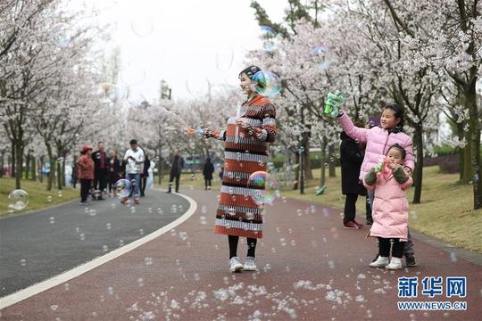 【高清】四川眉山:櫻花盛開迎客來