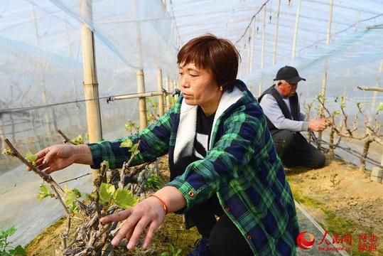 河北威縣:春分將至 春耕春管農事忙