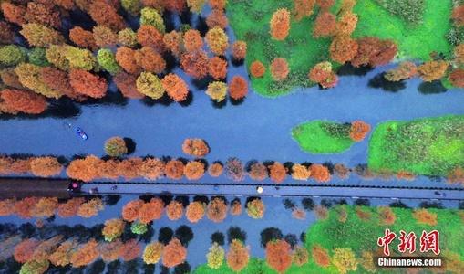 上海青浦水上森林色彩斑斓