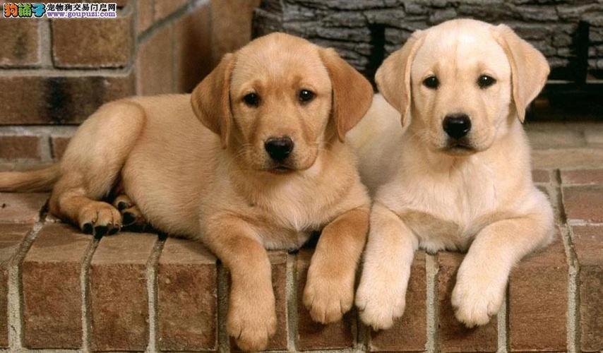 孙若雯在北京长期举办各种宠物美容培训班