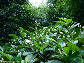天津园林景观