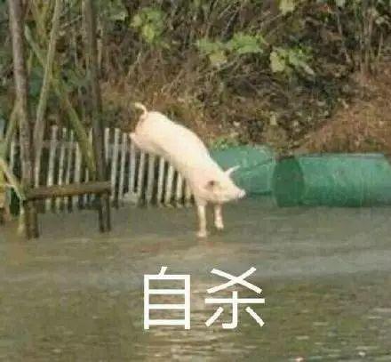 明明是狗年,为什么最火的是蠢萌的猪猪表情包? 轻松一刻 第12张
