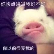 明明是狗年,为什么最火的是蠢萌的猪猪表情包? 轻松一刻 第28张