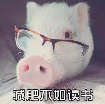 明明是狗年,为什么最火的是蠢萌的猪猪表情包? 轻松一刻 第36张