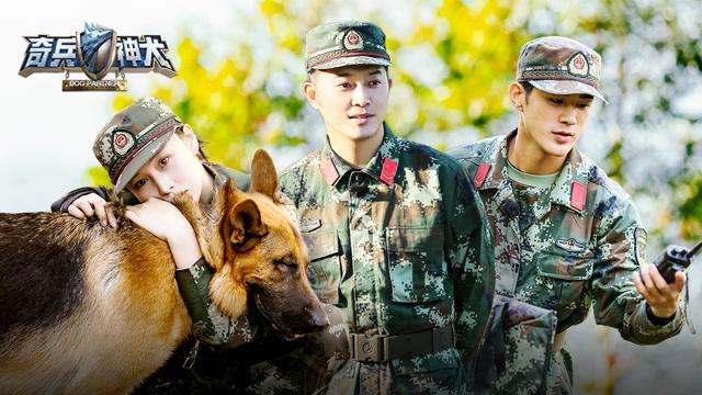 """大结局(上):张馨予被""""绑架""""警犬机智解救"""