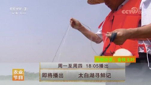 [美丽中国乡村行]太白湖寻鲜记 20190716