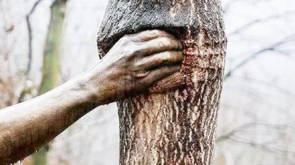 世界上最孤独的手,一棵树竟能握50年,而且中间从来没松过!