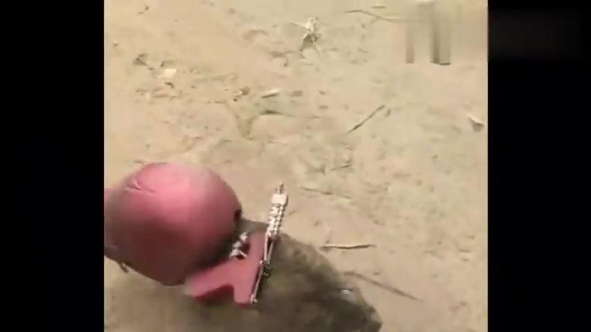 据说,西瓜视频上的狗,没一个正常的?