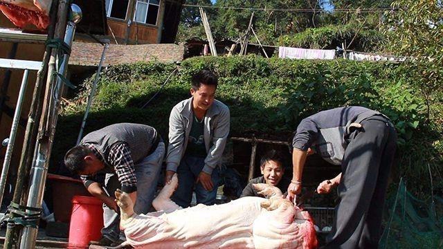 奇迹sf发布网外国人杀猪简直是无痛死亡,猪还没反应过来,就成了一堆猪肉