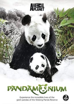 熊猫总动员剧照