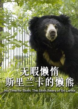无暇懒惰斯里兰卡的懒熊剧照