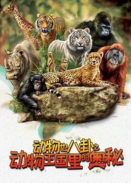 动物也八卦之动物王国里的奥秘剧照