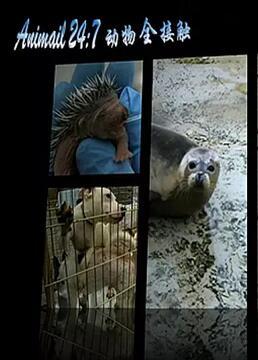 动物全接触剧照