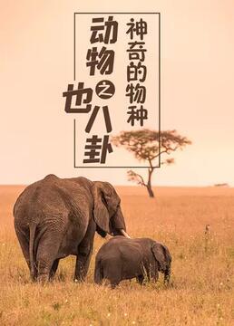 动物也八卦之神奇的物种剧照