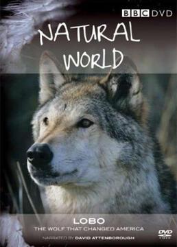 狼改变美国剧照