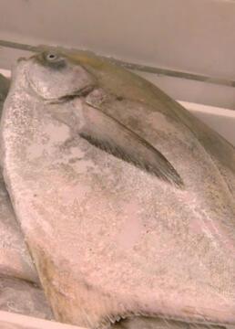 筑地深入世界上最大的鱼市场剧照