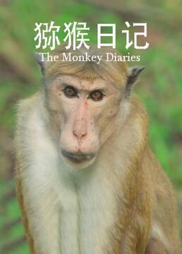 猕猴日记剧照