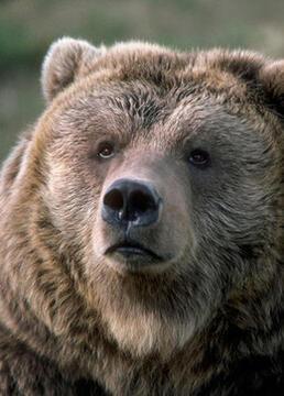 熊国度电单车日记剧照