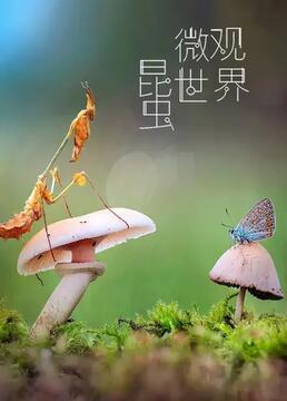 昆虫微观世界剧照