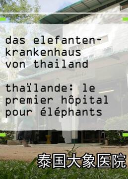 泰国大象医院剧照