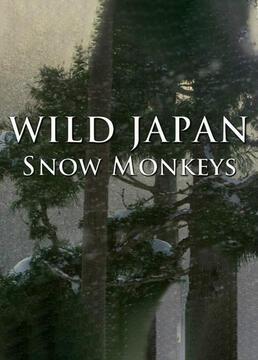 野性日本雪猴剧照