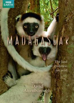 马达加斯加岛剧照