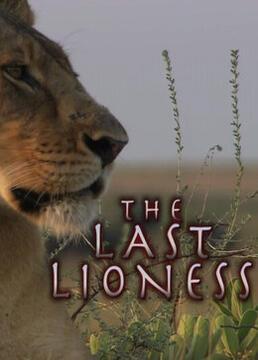 最后的母狮剧照