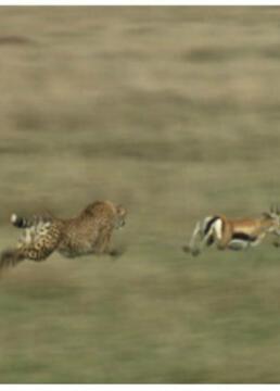 猎物vs猎手塞伦盖蒂平原上的生存之战剧照