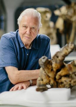 大卫爱登堡与巨象剧照