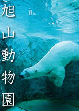 旭山动物园剧照