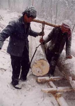 木帮长白山最后的伐木人剧照