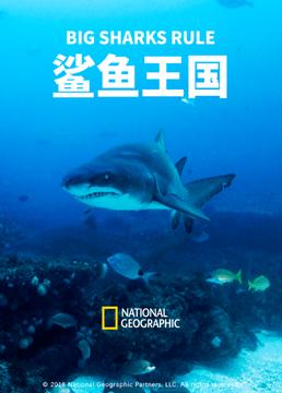 鲨鱼王国剧照