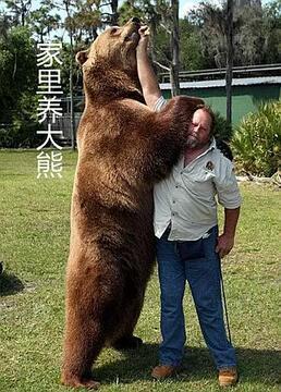 家里养大熊剧照