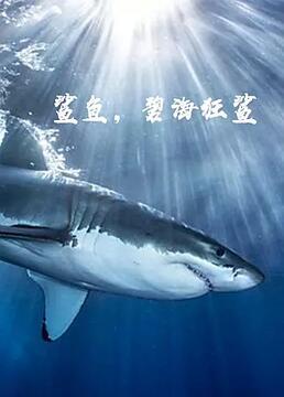 鲨鱼碧海狂鲨剧照