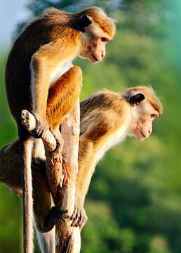 与猴共舞剧照