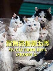 家有恶猫第五季